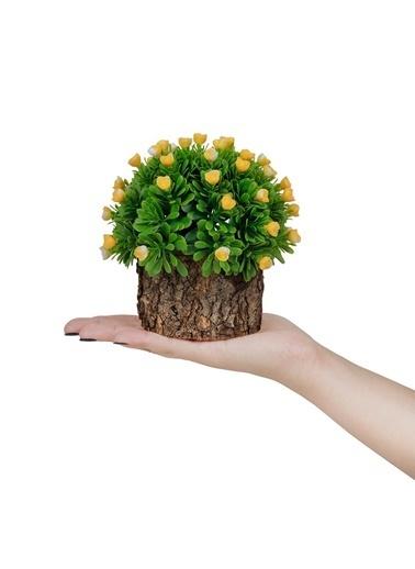 Çiçekmisin Doğal Saksıda Güllü Şimşir Sarı